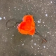 El amor existe ¡Hago chas y aparezco a tu lado!