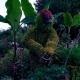 el jardinero fiel